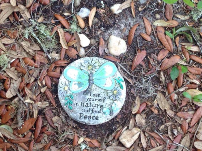 Monday-June 20th 2016, Lose Yourself in Nature and FindPeace